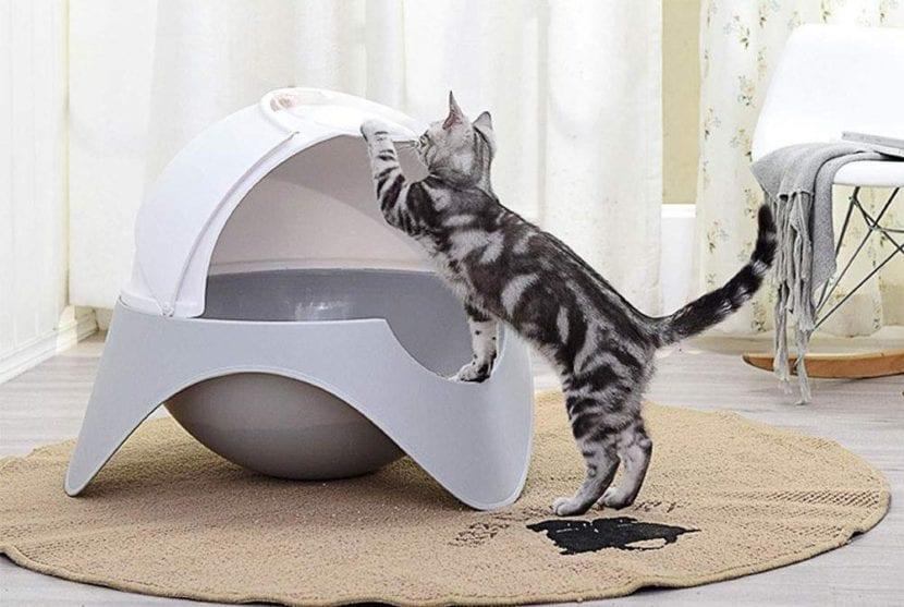 litières fonctionnelles pour le chat