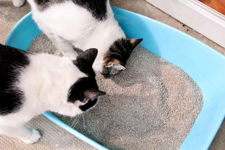 caca litière chat